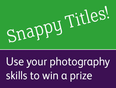 Snappy Titles!
